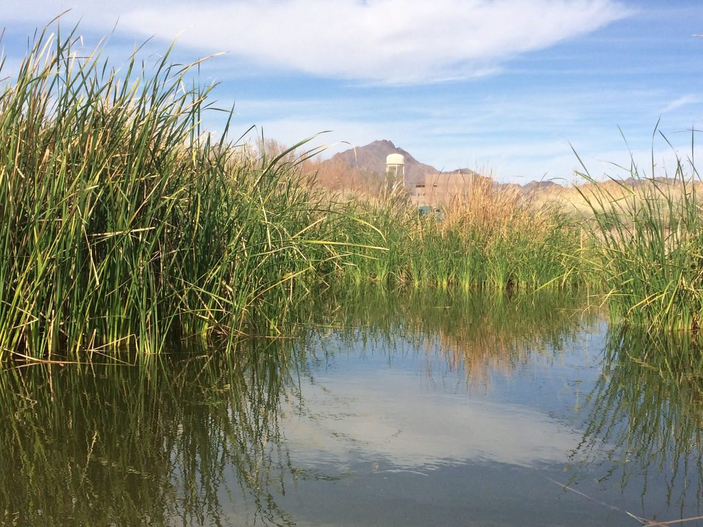 Las Vegas' City Parks and Nearby Natural Wonders