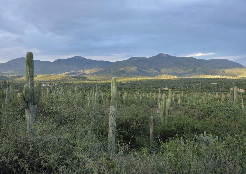 Tehuacán-Cuicatlán Biosphere Reserve
